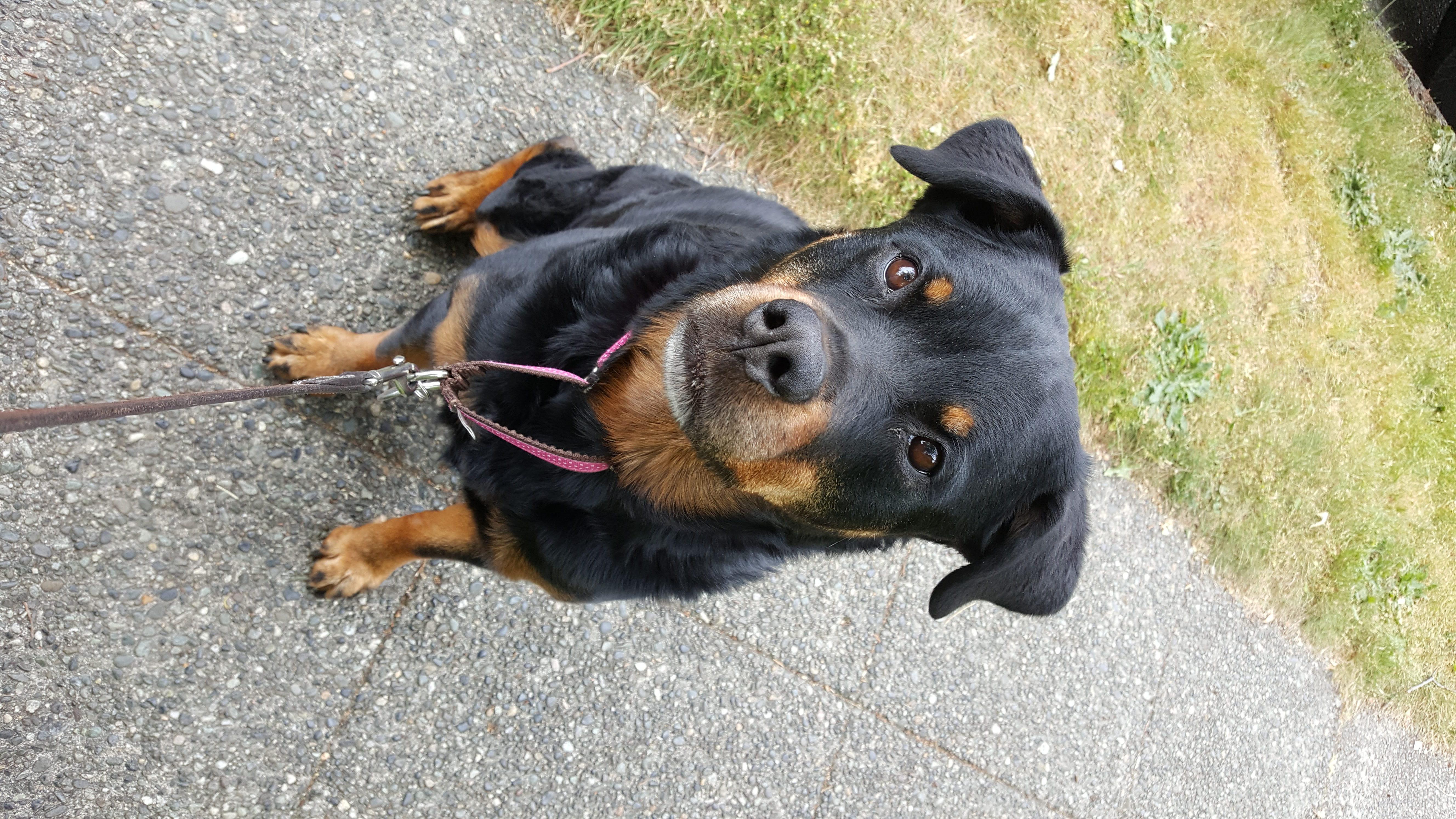 Dog Walker West Seattle