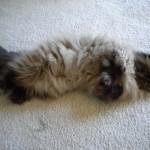 Kitty Sit