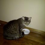 Normandy Park Cat Sitter