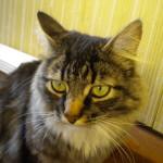 Cat Sitting Des Moines WA