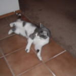 Cats, kittiy