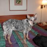 Hotel pet sitting