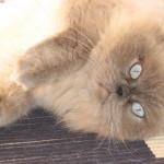 Normandy Park cat sitting