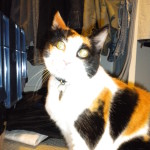 Cat Sitting Normandy Park