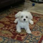 Burien, dog walker