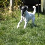 Dog Sitter Burien