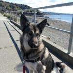 dog walker, dog walking, west seattle